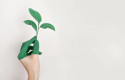 Steeds vaker groen energielabel voor bedrijven